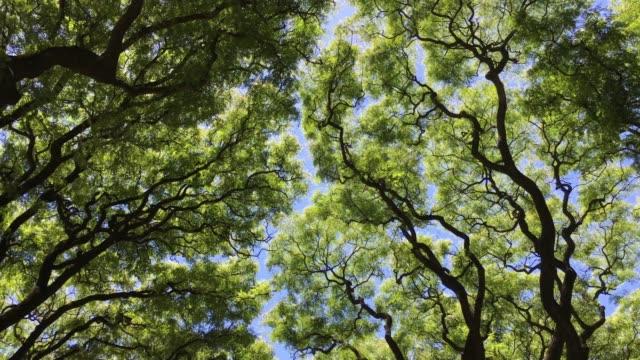 vidéos et rushes de branches d'arbre se déplaçant avec le vent - vue en contre plongée