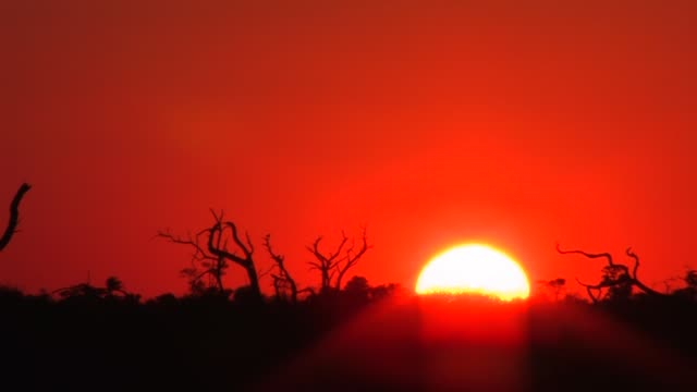 Tree branches outline an orange sky in a time lapse of the Bushveld of South Africa during the golden hour. Available in HD.