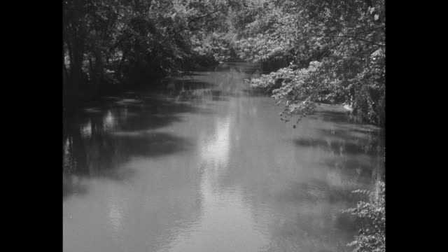 vídeos de stock e filmes b-roll de vs tree branches overhang still creek river with clouds in distance and pan down to river / note exact year not known documentation incomplete... - paredão rochoso