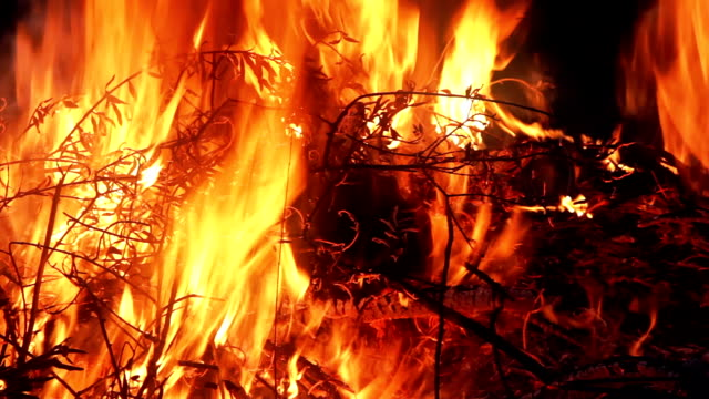Tree branches set on fire