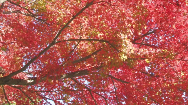 Tree branches with Autumn leaves