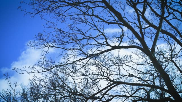 tree branches with buds sway in breeze - blue stock videos & royalty-free footage