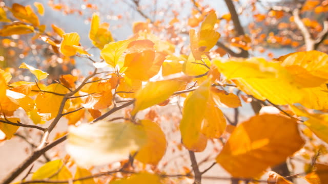 tree branches with colorful leaves dancing in the wind in autumn - autumn leaf color stock videos and b-roll footage