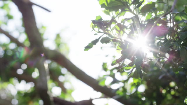 Tree Branches with Sun Flare