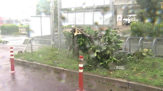 tree broken by typhoon, okinawa, japan - typhoon stock videos & royalty-free footage