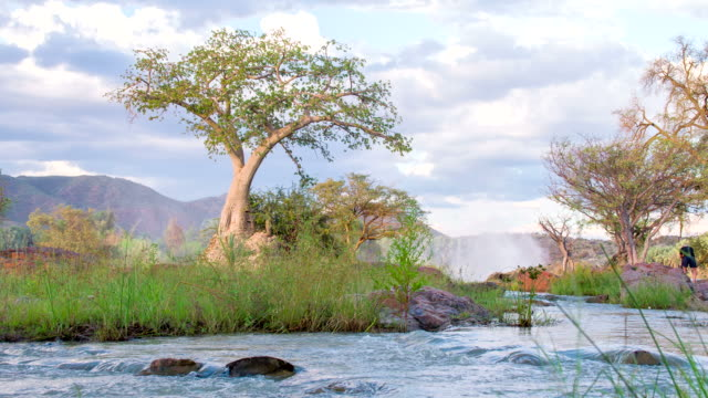 stockvideo's en b-roll-footage met ls tree by the river in namibia - namibië