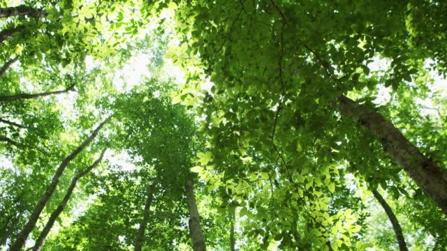 tree canopy in bijin bayashi forest, low angle - satoyama scenery stock videos & royalty-free footage