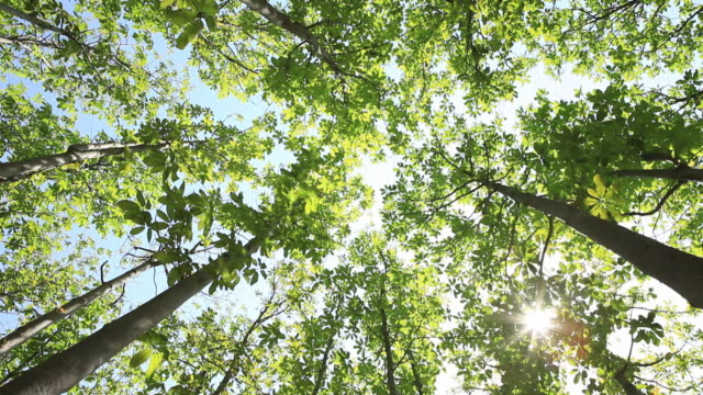 tree canopy of gallery in the garden and the sunlight - copertura di alberi video stock e b–roll