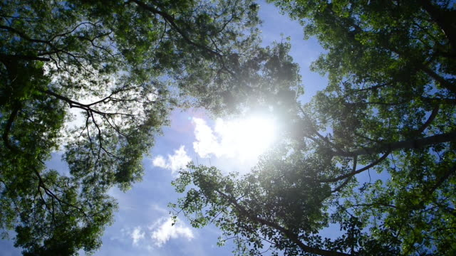 stockvideo's en b-roll-footage met tree canopy with glimpses of bright sunlight shining through - plantdeel