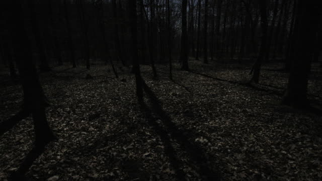 a tree casts a shadow under the glow of a full moon in winter. - vollmond stock-videos und b-roll-filmmaterial