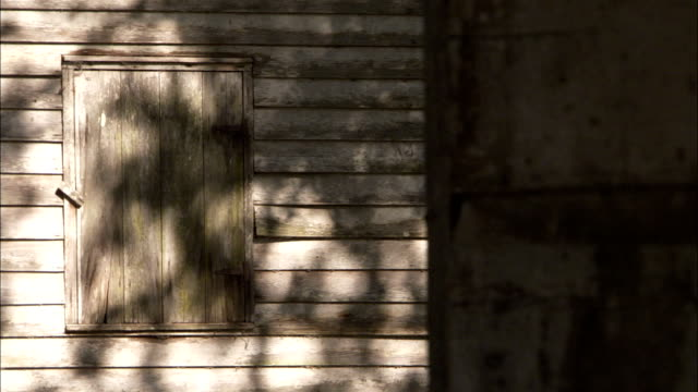 A tree casts leaf shadows on the outside of a slave cabin at the Evergreen Plantation Available in HD.