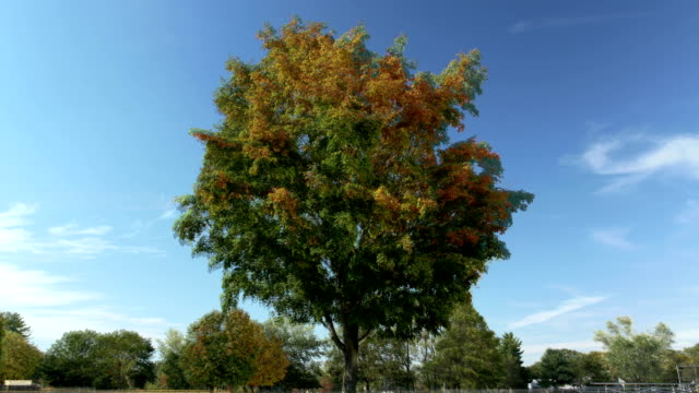 Tree changing with the seasons timelapse