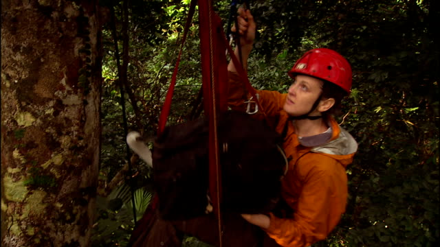 a tree climber moves her equipment upward before she continues her climb. - 国有林点の映像素材/bロール