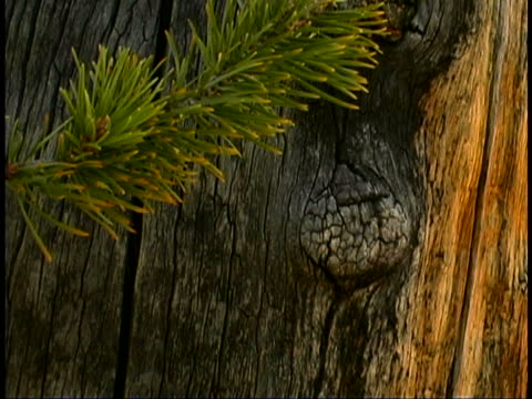 tree close-up - durability stock videos & royalty-free footage