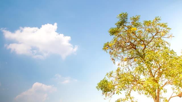 Träd, moln och blue sky timelapse