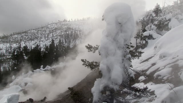 tree covered with ice and snow from geyser steam, Norris Basin, Yellowstone National Park scenic in winter