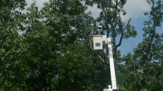 tree cut service in america. - hydraulic platform stock videos & royalty-free footage