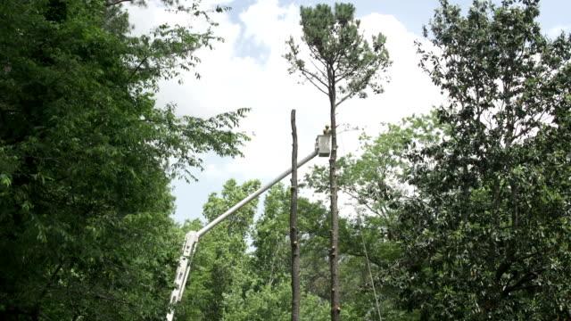 tree cut service - cherry picker stock videos & royalty-free footage