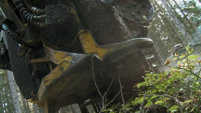 cu la tree cutting machine sawing tree in forest / pokljuka, triglav national park, slovenia - triglav national park stock videos and b-roll footage