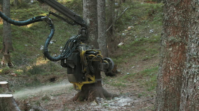 ws pan tree cutting machine sawing tree in forest / pokljuka, triglav national park, slovenia - timber stock videos & royalty-free footage