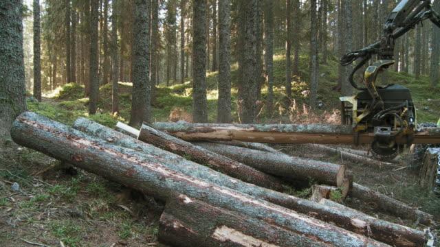 ws tree cutting machine sawing tree in forest / pokljuka, triglav national park, slovenia - triglav national park stock videos and b-roll footage