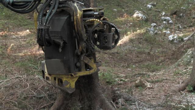 slo mo ms tree cutting machine sawing tree in forest / pokljuka, triglav national park, slovenia - triglav national park stock videos and b-roll footage