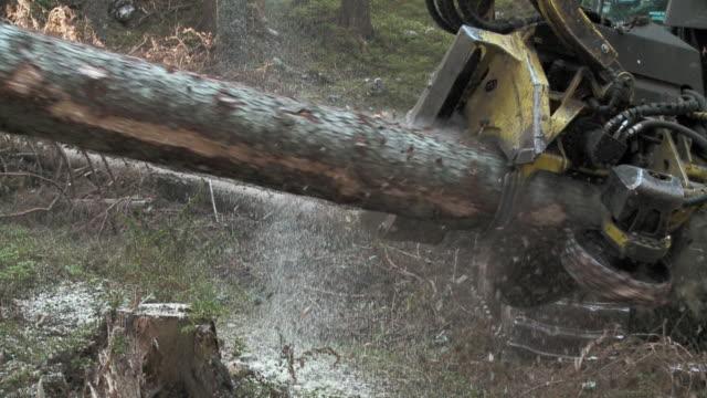 slo mo ms tree cutting machine sawing tree in forest / pokljuka, triglav national park, slovenia - pokljuka stock videos and b-roll footage