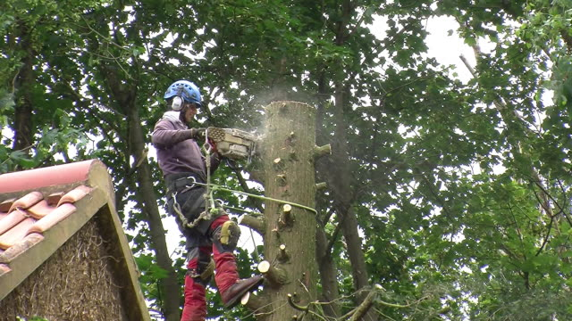 Tree Cutting Using Chainsaw Stock Footage Video - Getty Images