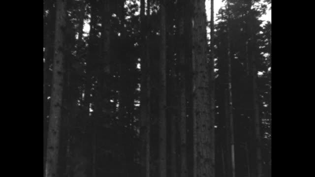 tree falls in woods / hoist moves huge logs as lumberjacks watch from background / tree trunks ride on flatcars as train chugs thru forest / note:... - lumberjack stock videos & royalty-free footage