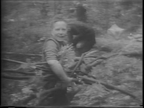 vidéos et rushes de a tree falls on a sidewalk in berlin / two men saw a large log into smaller pieces with a twohandled saw / two men dig out a large stump with axes /... - 1945
