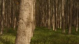 Tree farm forest background