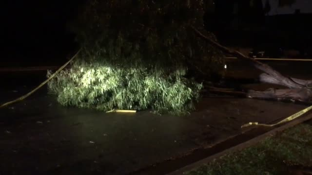 tree fell blocking most of iowa st in costa mesa city crew already sawing it up power out in area but not because of the tree no edison trucks around - costa mesa stock videos & royalty-free footage