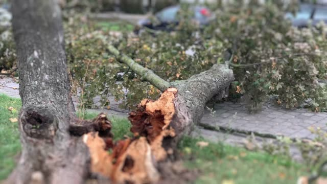 vídeos de stock e filmes b-roll de tree fell down onto the car in the street - danificado
