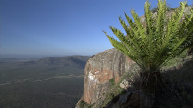 Tree fern (Blechnum sp.), steep cliffs and deep valley at sunrise, Kenya