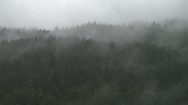 tree fog over mountains - pine tree stock videos & royalty-free footage