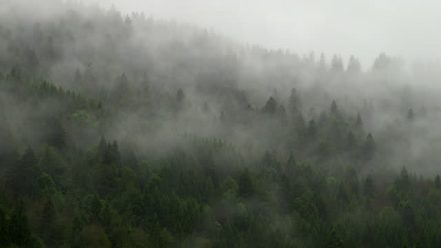 tree fog over mountains - freddo video stock e b–roll