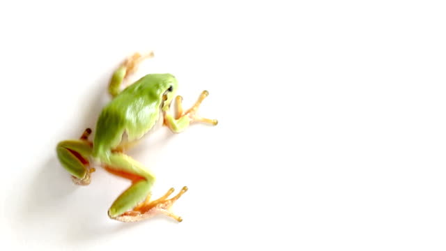 tree frog crawling and jumping away from the screen - frog stock videos and b-roll footage