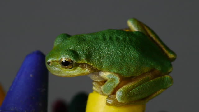 a tree frog sitting on colored pencil - colored pencil stock videos and b-roll footage