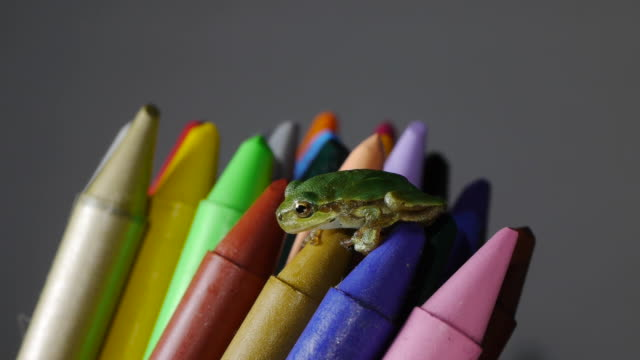 a tree frog sitting on colored pencil - crayon stock videos and b-roll footage
