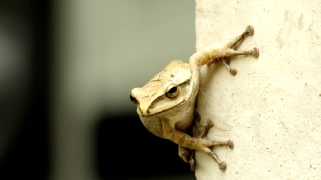 tree frog - in front of stock videos & royalty-free footage
