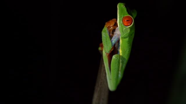 MS Tree Frog