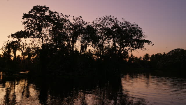 tree full of egrets flying off at sunrise in alleppey backwaters, kerala india - backwater stock videos & royalty-free footage