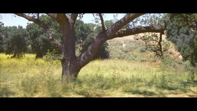 vidéos et rushes de ms pan tree grass group / new york, united states - plaine caractéristiques de la terre