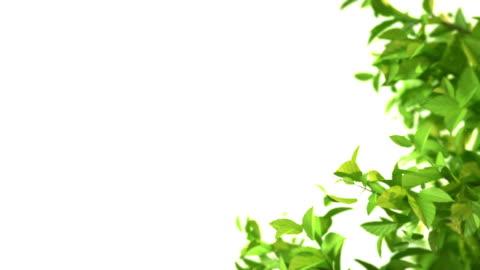 tree grow - branch stock videos & royalty-free footage