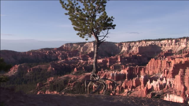 a tree grows in a harsh desert climate. - root stock videos and b-roll footage