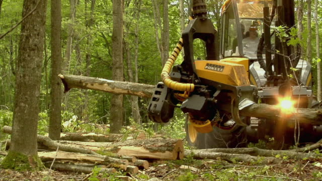 MS, Tree harvester cutting trees in forest, Manistique, Michigan, USA
