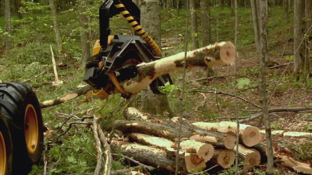 ms, pan, tree harvester cutting trees in forest, manistique, michigan, usa - upper peninsula stock videos & royalty-free footage