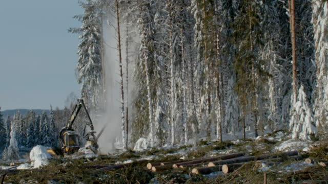 tree harvesting in sweden - log stock videos & royalty-free footage
