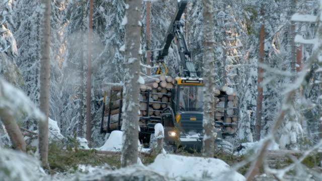 stockvideo's en b-roll-footage met tree harvesting in sweden - boomstam
