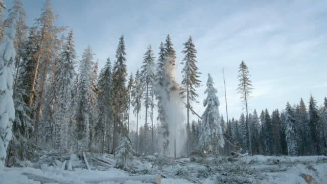 tree harvesting in sweden - forestry industry stock videos & royalty-free footage